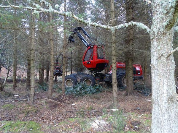Harvester Thinning